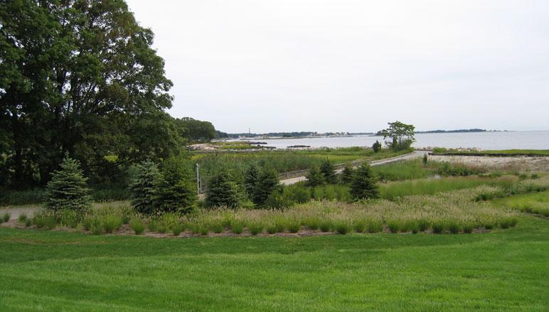darien tidal wetland restoration - environment