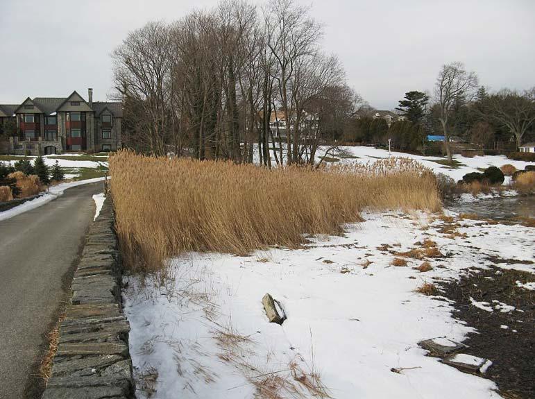 landtech tidal wetland restoration - phase one