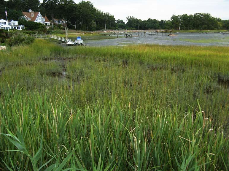 landtech tidal wetland restoration - phase five